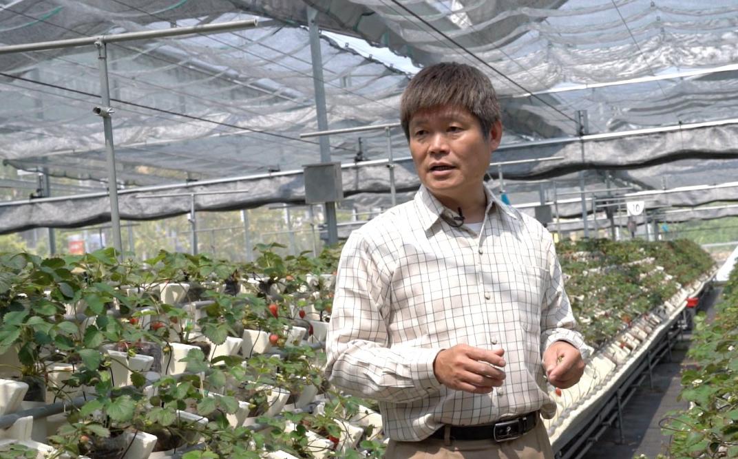 【科技農業】黃添富 務農就是要對錢斤斤計較