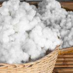 垃圾掩埋場不再是最終歸處,棉花廢棄物轉變成生物降解塑膠
